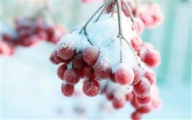 Neige, fruits rouges
