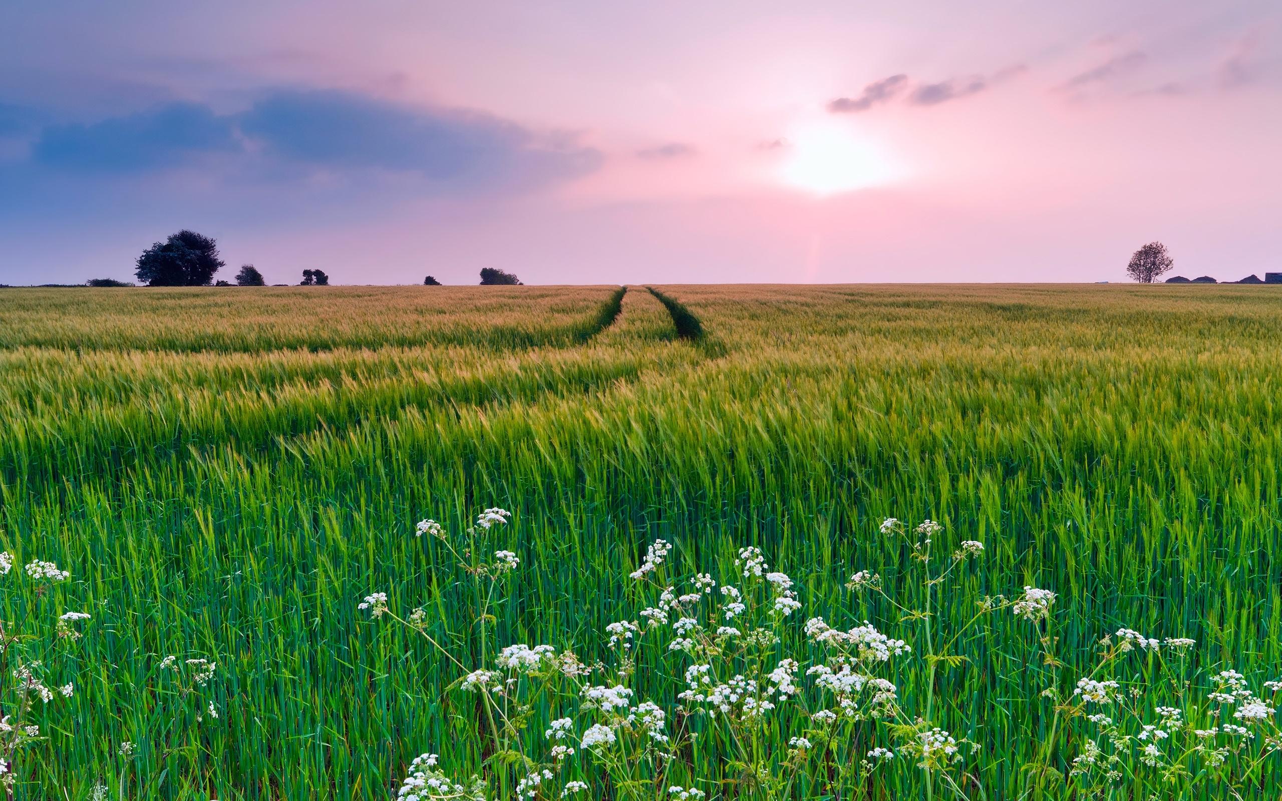 Nature paysage champ herbe fleurs t coucher de for Fond ecran ete fleurs