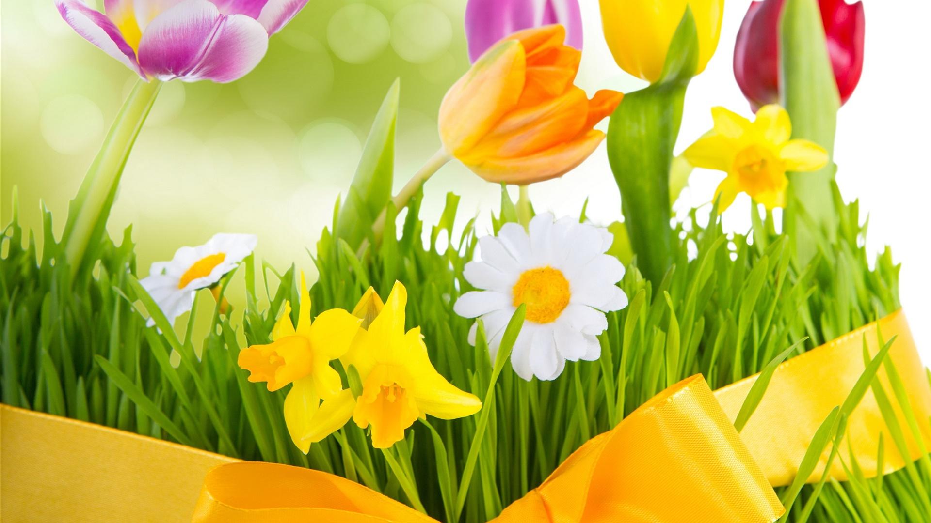 Printemps, les fleurs colorées, tulipes Fonds d'écran | 1920x1080 Fond d'écran télécharger | FR ...