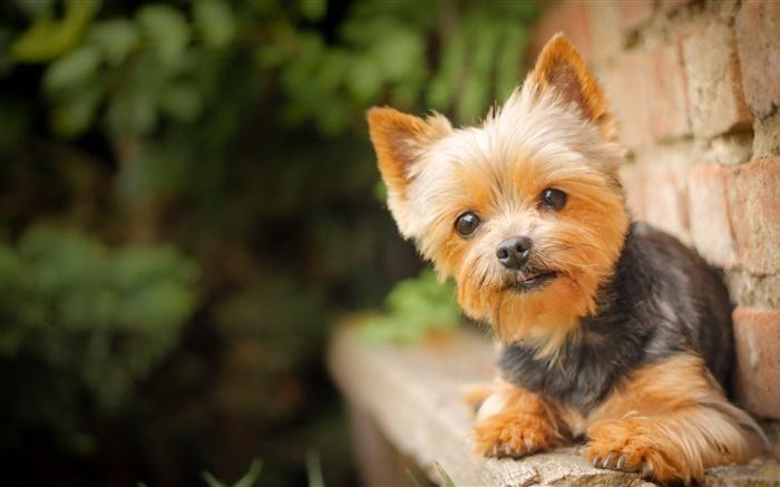 animal mignon petit chien -#main