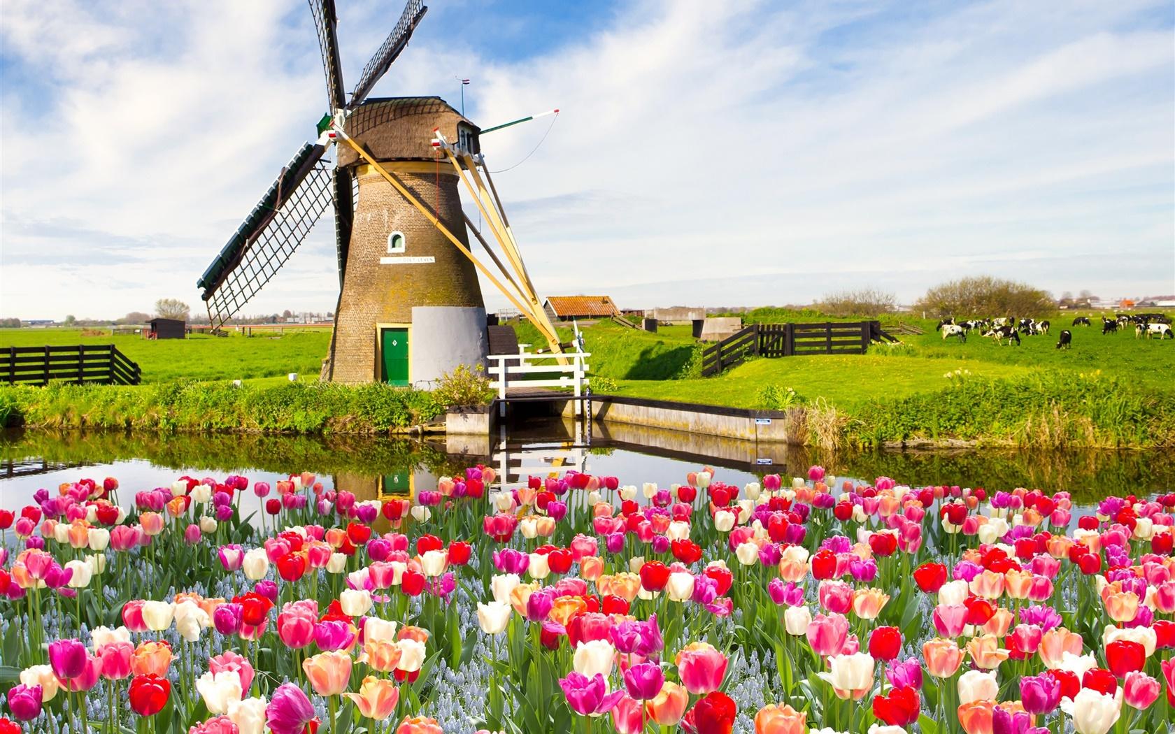 Village moulin vent fleurs de tulipes rivi re la for Immagini gratis per desktop primavera