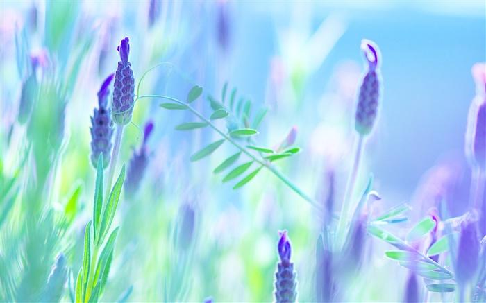 fleurs bleues violet t flou fond hd fonds d 39 cran fleurs fond d 39 cran aper u fr. Black Bedroom Furniture Sets. Home Design Ideas