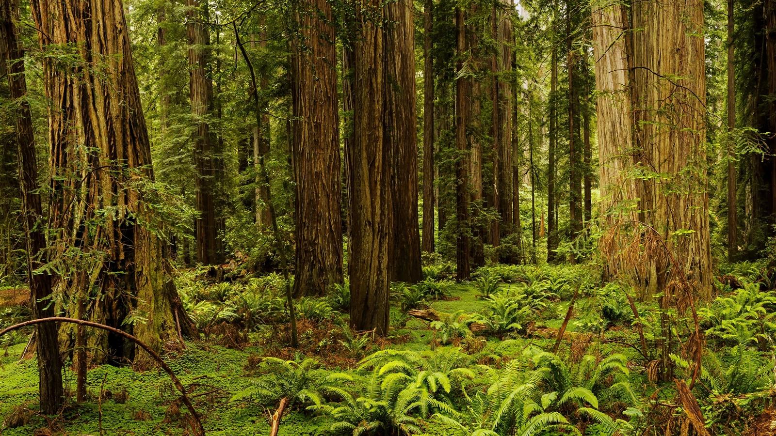 201 Tats Unis Californie Redwood National Et Parcs For 234 T