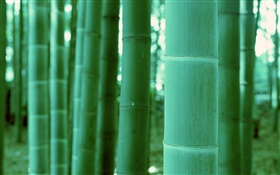 Bamboo close-up, bokeh HD Fonds d'écran