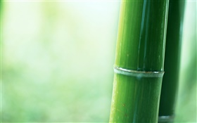Bamboo partielle close-up HD Fonds d'écran