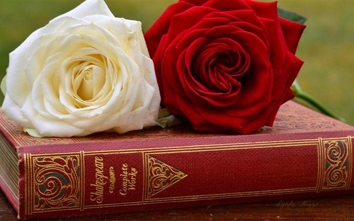 Blanc et rose rouge fleurs, livre HD Fonds d'écran   fleurs   Fond d'écran Aperçu   FR.HDWALL365.com