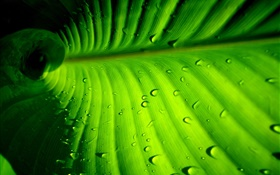 Green leaf close-up, rayures, des gouttes d'eau