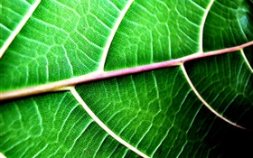 contexte de Green leaf close-up